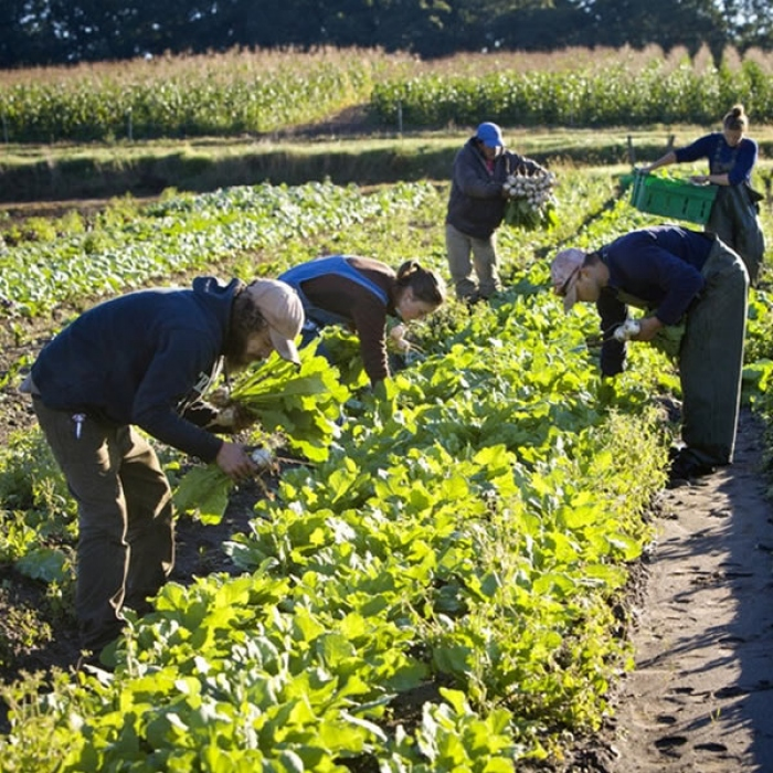 Técnico em Agropecuária Integrado ao Médio